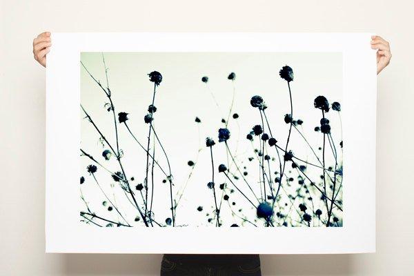 Black and white nature print